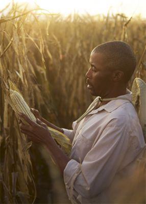 Mees kontrollib maisi