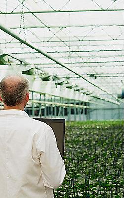 Caucasian scientist holding laptop examining plants in greenhouse