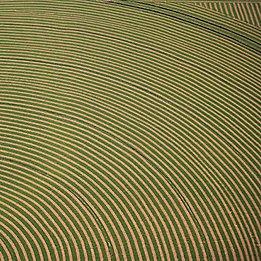 Alfalfa-Field-Texture