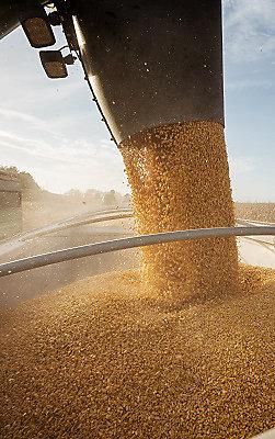 Corn_Harvest_Minnesota_Desktop