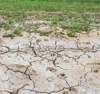 Farming-on-the-Forefront Salt soil image