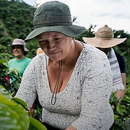 Women in agriculture face barriers