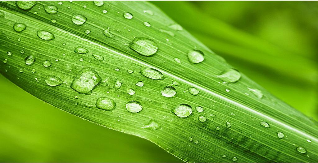 Green_leaves_3