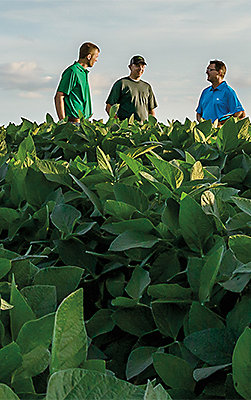 Photo - Growers in soybean field