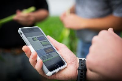 Photo - Agronomy videos - looking at phone