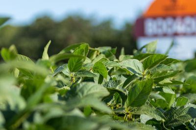 Soybean in field with sign