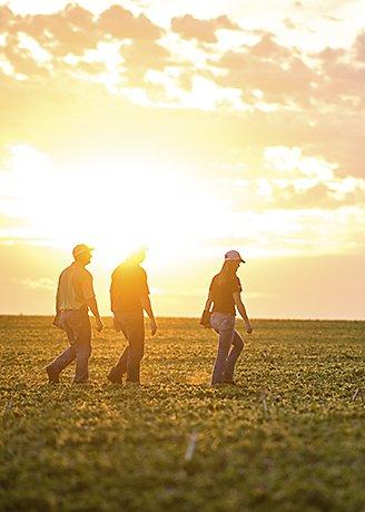 Imagen de personas caminando en un campo de maiz
