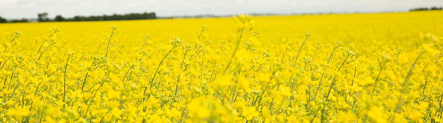 Brevant™ seeds for Nexera™ Production Contracts