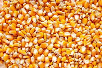 Corn Hero