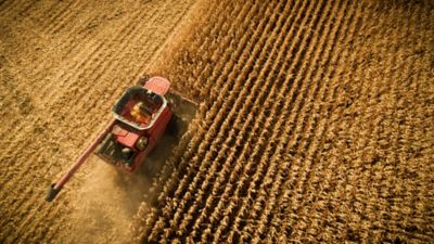Photo - Arial View - Corn Harvest