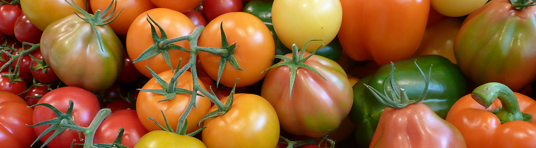 Corteva  Gemüsebau