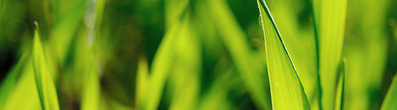 Corteva Herbizide
