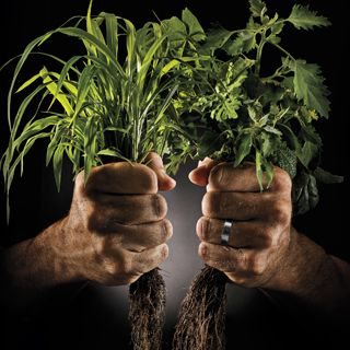 Two hands holding weeds