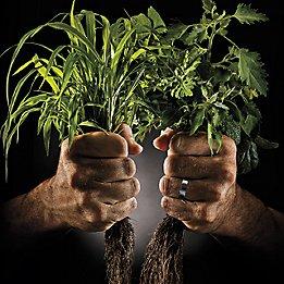 Deux mains tenant des mauvaises herbes