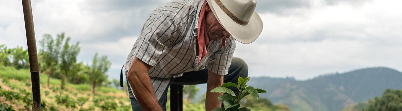 Farmer Planting Crop