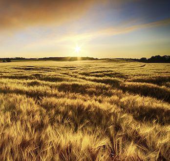 Farming_for_the_Future