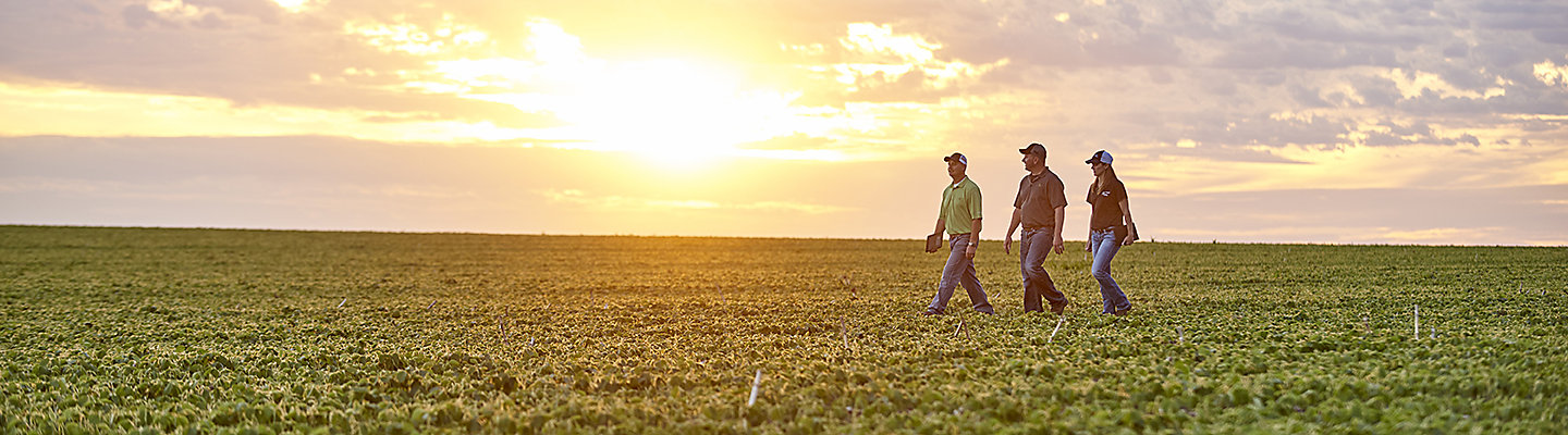 People in soybean field at Sunset