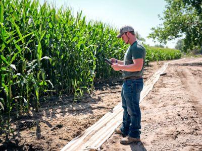 Man standing by cornfield