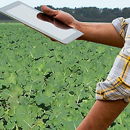 using tablet in oilseed rape crop