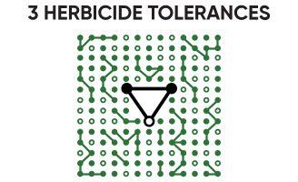 Icon - 3 Herbicide Tolerances