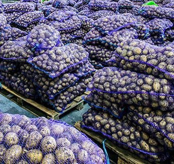 many purple-mesh bags of good on wooden pallets