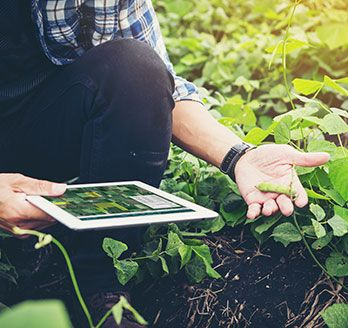 Man with iPad in field inspecting crops