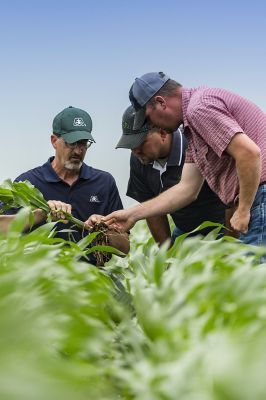 Pioneer rep helping growers - field shot