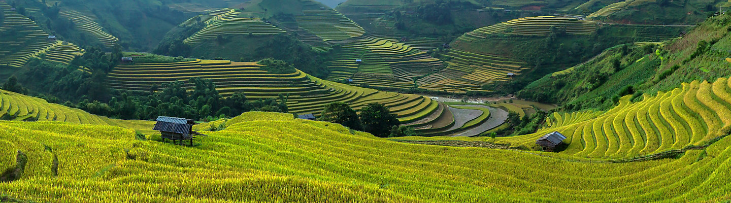 Scenic view of terraced rice fields in Vietnam.
