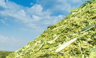 Pile of silage corn