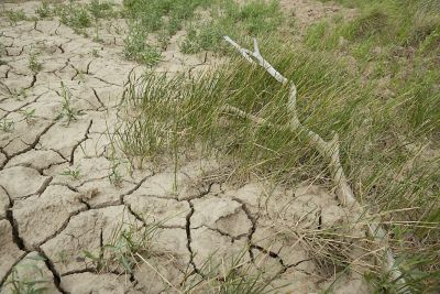 cracked dry pasture in Texas