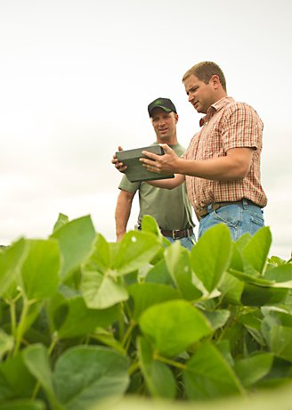 Men analyzing crops in field