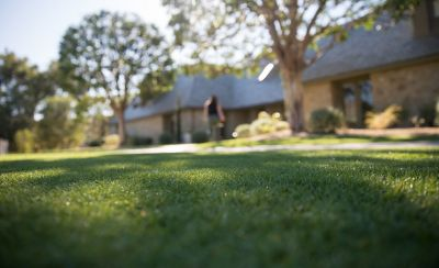 Backyard of house with closeup of grass and trees
