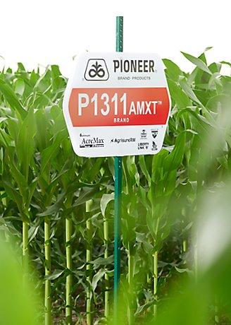Corn, Pioneer field sign