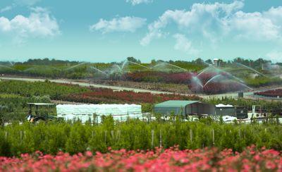 Nursery field with irrigation systems running