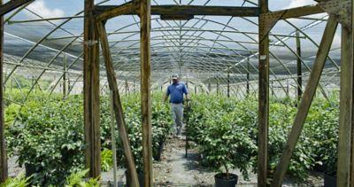 Man walking through greenhouse