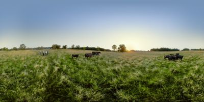 360 pasture view