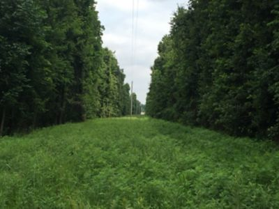 Power lines with trees on both sides