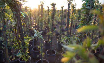 Tall plants in pots