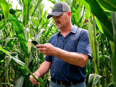 Photo - Man reviewing corn leaf symptoms in field - looking at phone