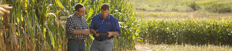 Два мужчины-агронома в поле кукурузы
