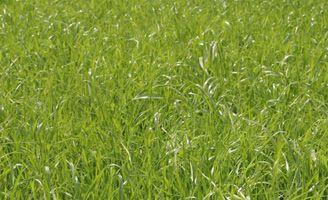 Grass ley