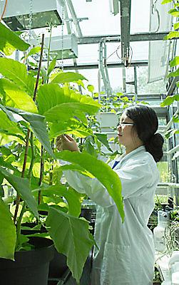 Wetenschapper in lab met planten