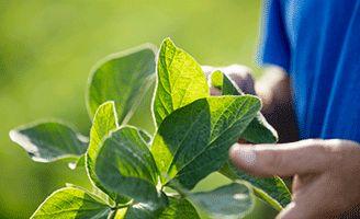 foliar-crop-condition-image