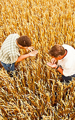Image of farmers in wheat farm