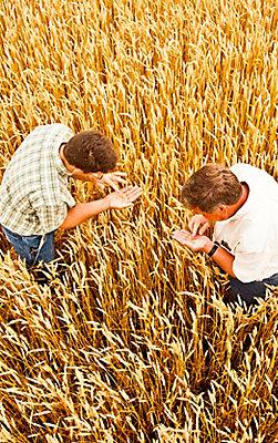 Image of farmers in wheat farm