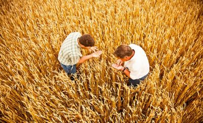 Image of farmers in wheat