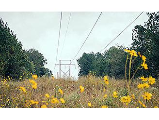 Beautiful wildflowers in ROW