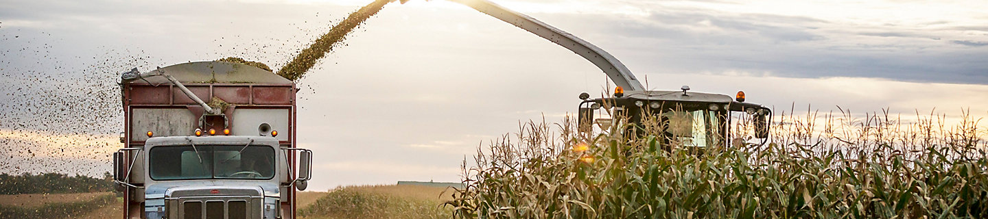 Harvesting a corn field