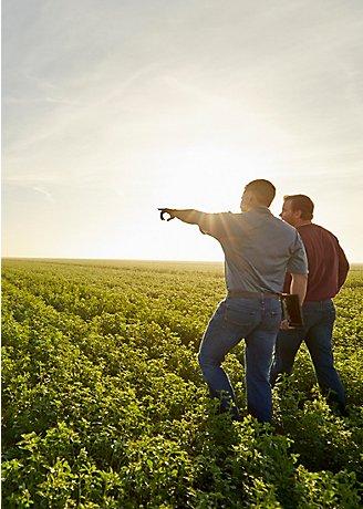 Men walking in alfalfa field