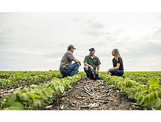 inspecting early season soybeans